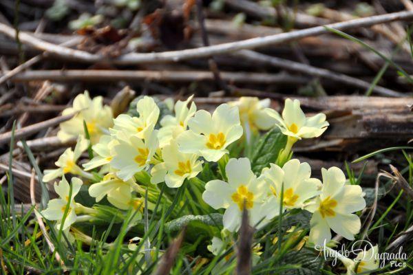 fiori-001DD921903-5E51-2B33-7094-DF586C97B82E.jpg