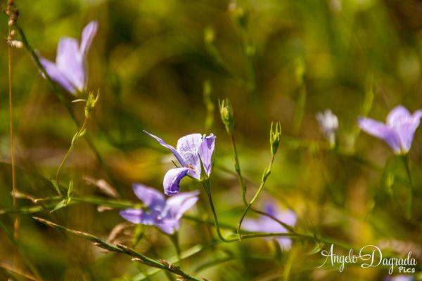 fiori-009B57DDDD0-DEE7-E4B3-15C2-F22A712FA39C.jpg