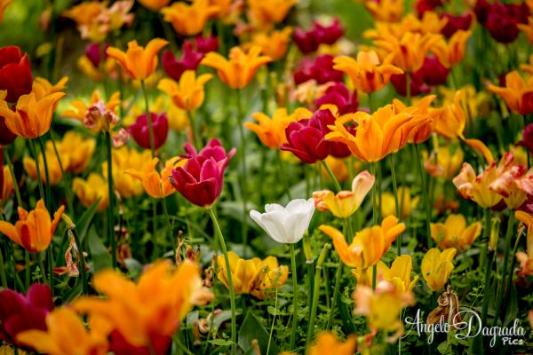 fiori-025C6A49E41-645C-6BAF-4933-033EEFB1EB87.jpg
